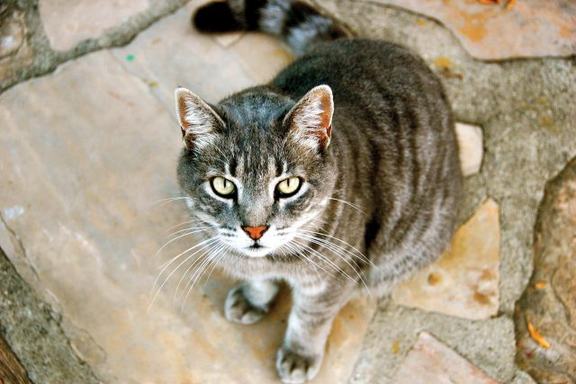 Featured Pet: Oscar