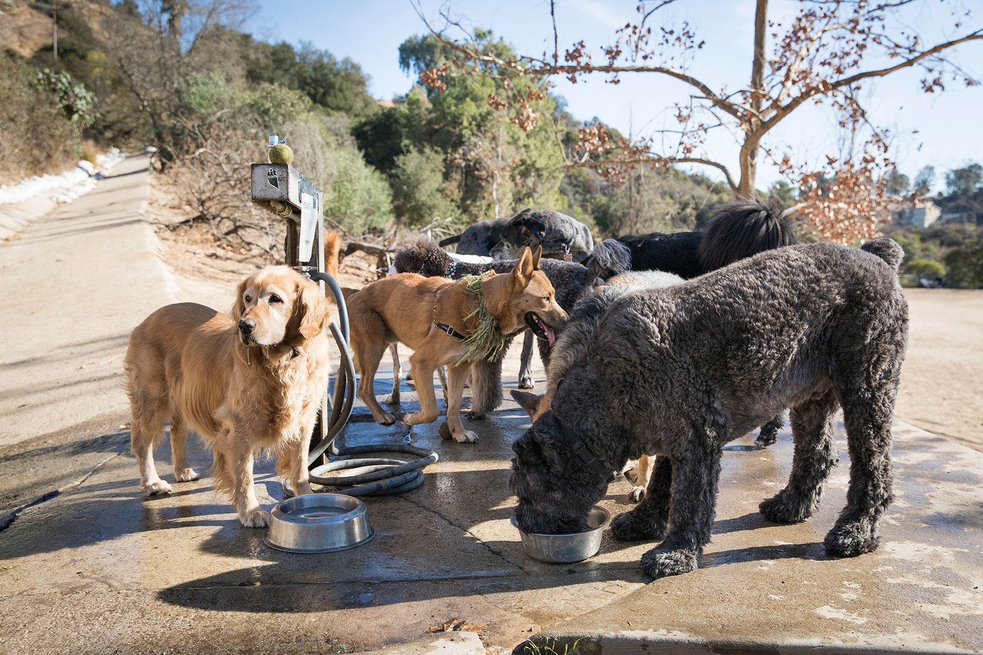 Animal Care - Laurel Canyon Dog Park