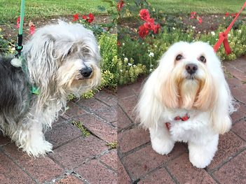 Tallulah & Max