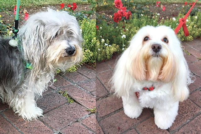 Featured Pets: Tallulah and Max