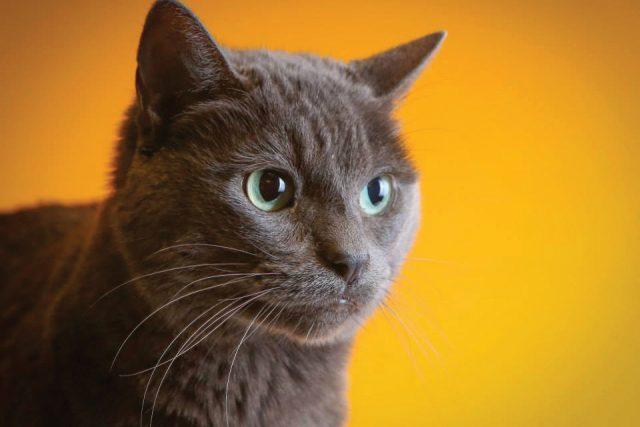 Featured Pet: Veruca