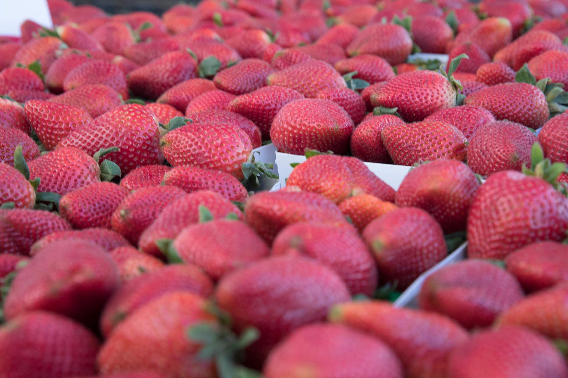 Farmers_Market_11