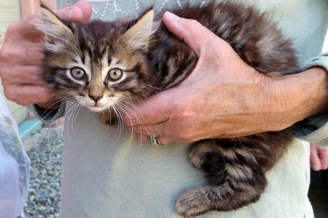 Featured Pet: Jack