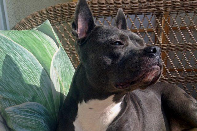Featured Pet: Lulu