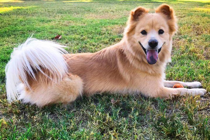 Featured Pet: Murrie