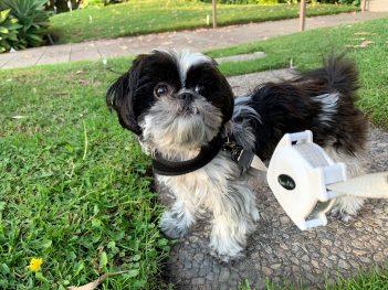 Featured Pet: Sophia